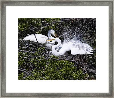 A Happy Couple Framed Print by Phill Doherty