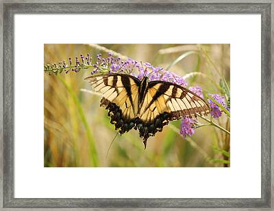 Framed Print featuring the photograph A Hard Flight by Kathy Gibbons