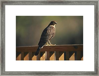 A Hawk Takes A Rest On A Porch Rail Framed Print by George F. Mobley