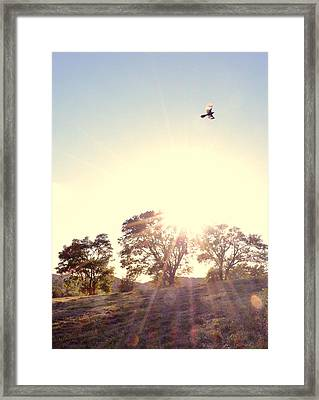 A Hawks View Framed Print