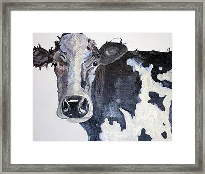 A Hershey Cow Framed Print by Quinton Chapman