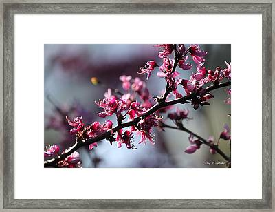 Framed Print featuring the photograph A Hint Of Spring  by Amy Gallagher