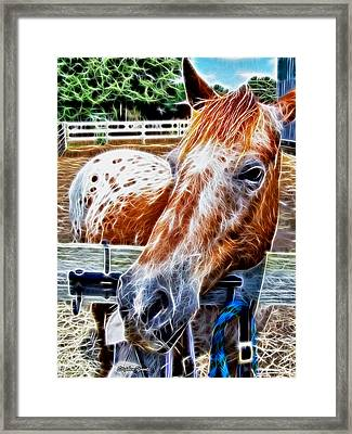 A Horse Of Course Framed Print by Stephen Younts
