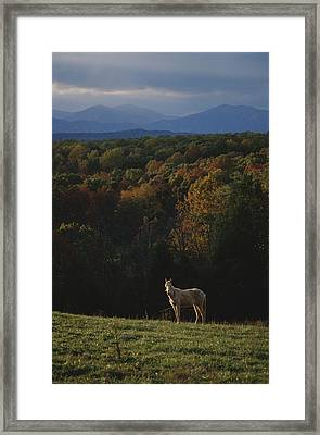 A Horse Stands On A Hill Overlooking Framed Print by Sam Kittner