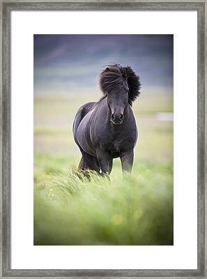 A Horse With Its Mane Blowing In The Framed Print by David DuChemin