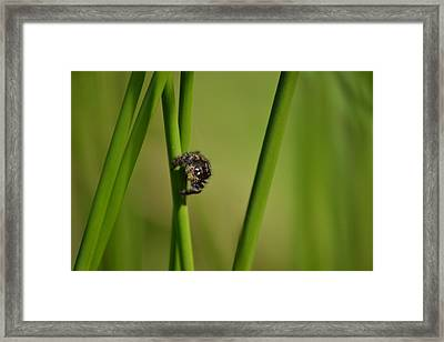 Framed Print featuring the photograph A Jumper In The Grass by JD Grimes