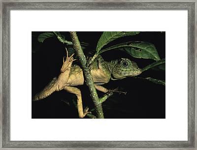A Juvenile Lizard Climbing Among Tree Framed Print