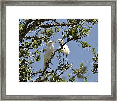 A Kiss Is Just A Kiss... Framed Print