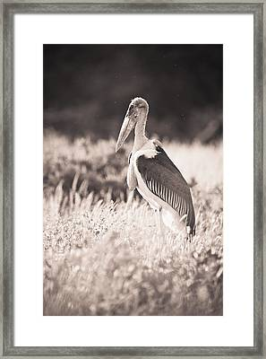 A Large Bird Stands In The Grass Framed Print by David DuChemin