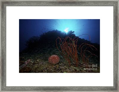 A Large Pin-cushion Sea Star Framed Print by Terry Moore