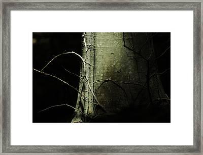 A Life Full Of Shadows Framed Print by Rebecca Sherman