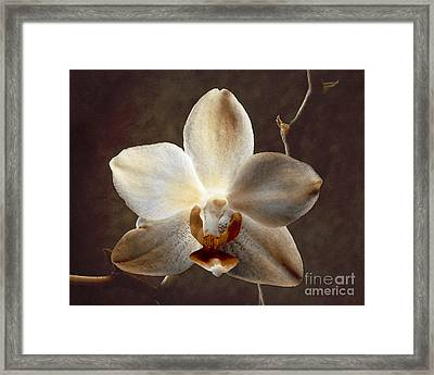 A Light From Within Framed Print