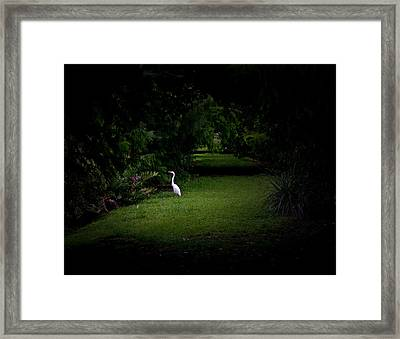 A Light In The Forest Framed Print by Mark Andrew Thomas