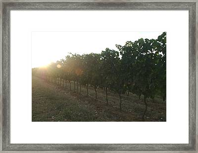 A Line Of Vines Leads To The Setting Framed Print by Heather Perry