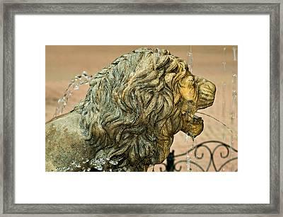 A Lion In Summer Framed Print