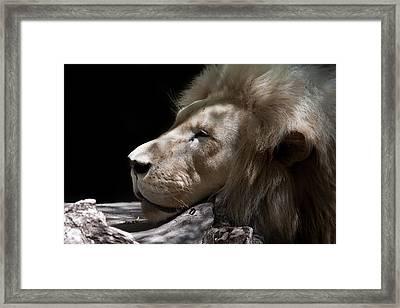 A Lions Portrait Framed Print by Ralf Kaiser