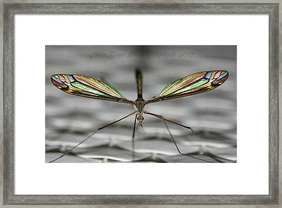 A Little Bling For The Wings Framed Print by Ted Albert