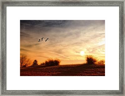 A Little Peace Framed Print by Tom York Images