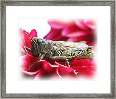 A Little Privacy Please Framed Print by Victoria Sheldon