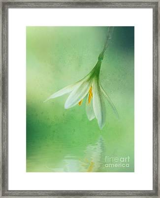 A Little White Flower Framed Print by Lee-Anne Rafferty-Evans