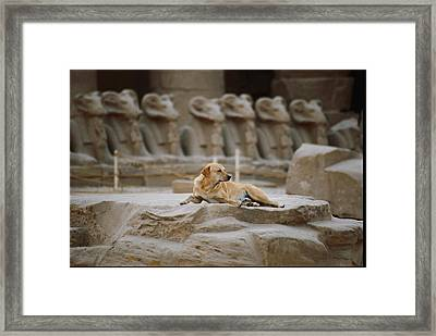 A Local Stray Dog Pausing To Rest Framed Print
