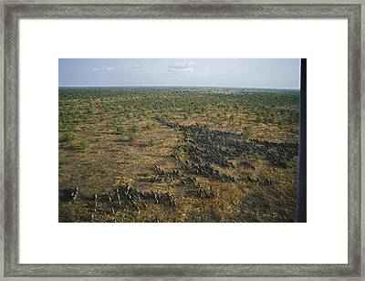 A Lone Female Elephant, The Matriarch Framed Print by Michael Nichols