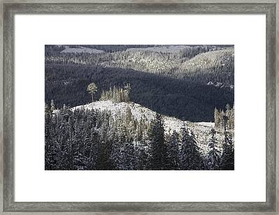 A Lone Stand Of Trees Stands Framed Print by Taylor S. Kennedy