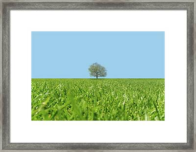 A Lone Tree In A Field Framed Print by Richard Newstead