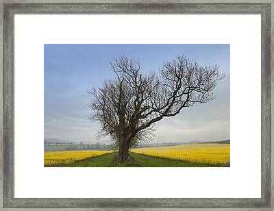 A Lone Tree On The Edge Of A Yellow Framed Print by John Short