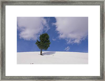 A Lone Whitebark Pine Tree On A Snowy Framed Print