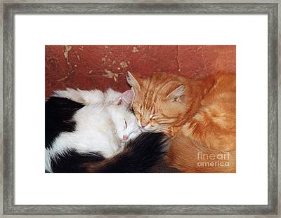 A Loving Couple- Pandute And Liutukas Framed Print by Ausra Huntington nee Paulauskaite