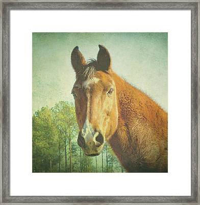 Framed Print featuring the photograph A Loving Soul by Robin Dickinson