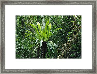 A Lush Woodland View With Fern Growing Framed Print