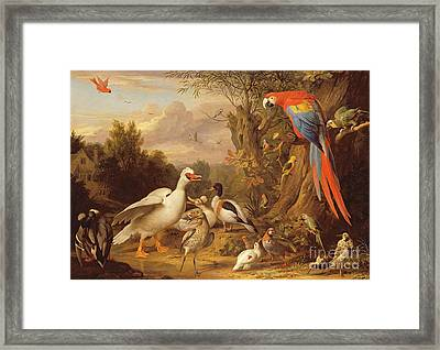 A Macaw - Ducks - Parrots And Other Birds In A Landscape Framed Print by Jakob Bogdani