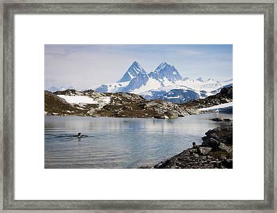 A Man Swims In A High Alpine Lake Framed Print