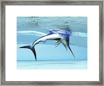 A Marlin Dives In Shallow Waves Looking Framed Print by Corey Ford