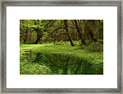 A Meadow Inside The Quinault Valley Framed Print by Darlyne A. Murawski