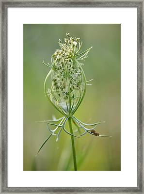 Framed Print featuring the photograph A Meal Of Lace by JD Grimes