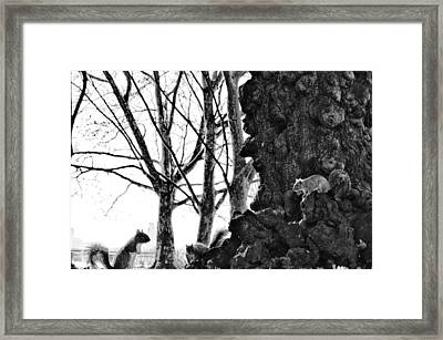A Meeting Of Squirrels Framed Print by Bill Cannon