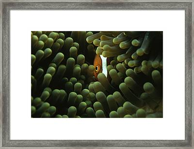 A Member Of The Research Team Framed Print by Sisse Brimberg