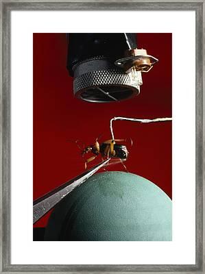 A Microphone Triggers A Flash Framed Print by James P. Blair