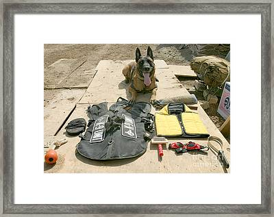 A Military Police Dog Sits Framed Print by Stocktrek Images
