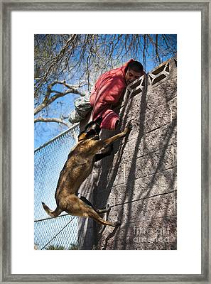 A Military Working Dog Climbs A Wall Framed Print by Stocktrek Images