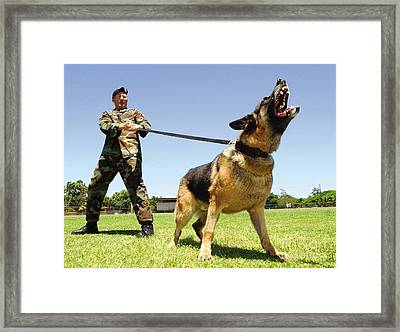 A Military Working Dog Shows His Teeth Framed Print