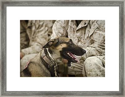 A Military Working Dog Sits At The Feet Framed Print by Stocktrek Images