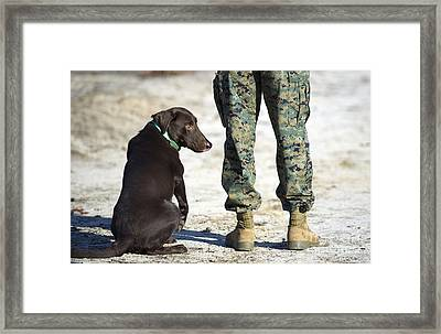 A Military Working Dog Waits Framed Print by Stocktrek Images