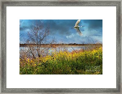 A Moment In Time In The Journey Of The Great White Egret . 7d12643 Framed Print by Wingsdomain Art and Photography