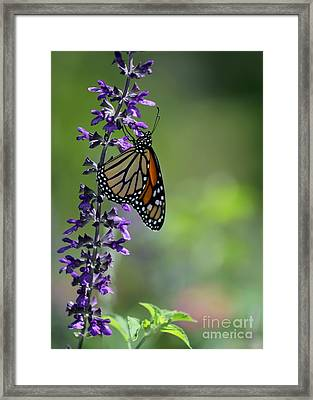 A Moment In Time Framed Print by Sabrina L Ryan