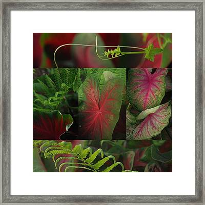 A Mosaic Of Red And Green Calladium Leaves Framed Print by Jennifer Holcombe