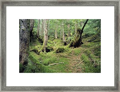A Mossy Woodland View On Queen Framed Print by Bill Curtsinger